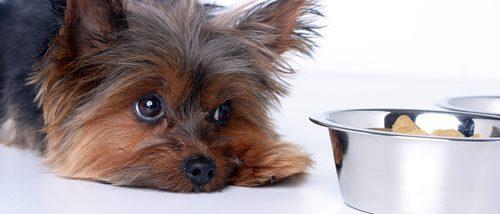 ¿Cómo puedo saber si mi perro tiene una alergia alimentaria?