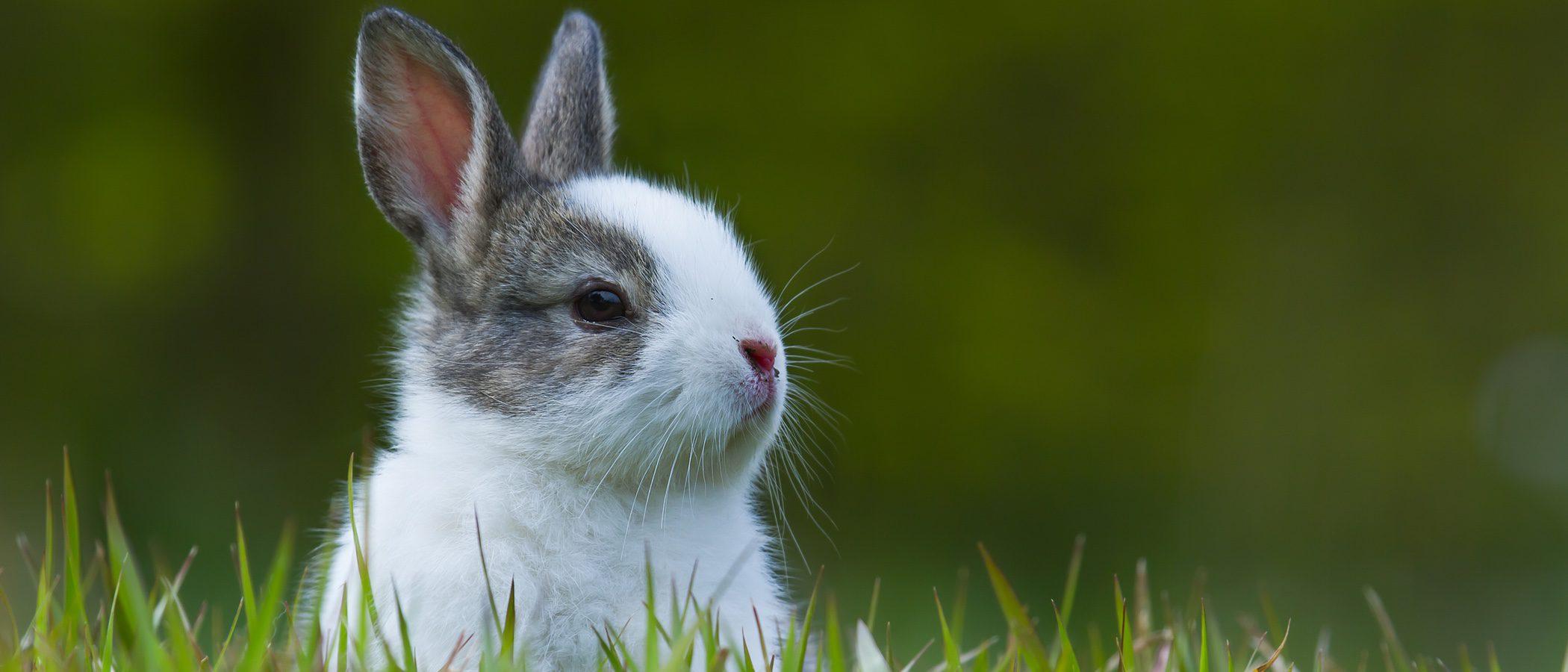 Cómo evitar que mi conejo padezca estrés