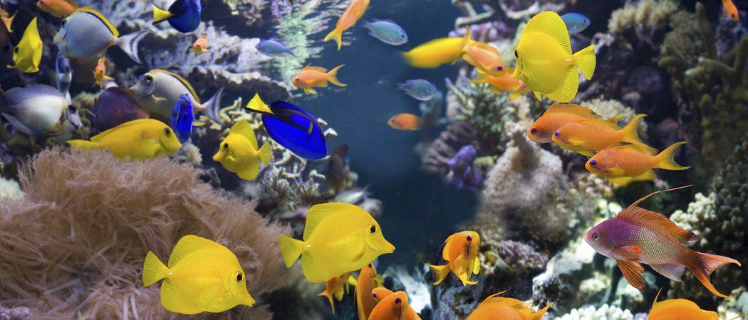 Los peces m s f ciles de cuidar agua dulce for Peces agua dulce calida para acuario