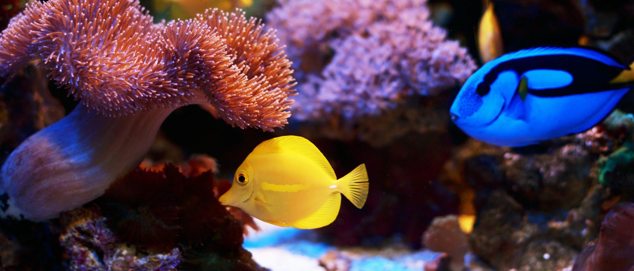 Los peces tropicales m s f ciles de cuidar bekia mascotas for Peces tropicales
