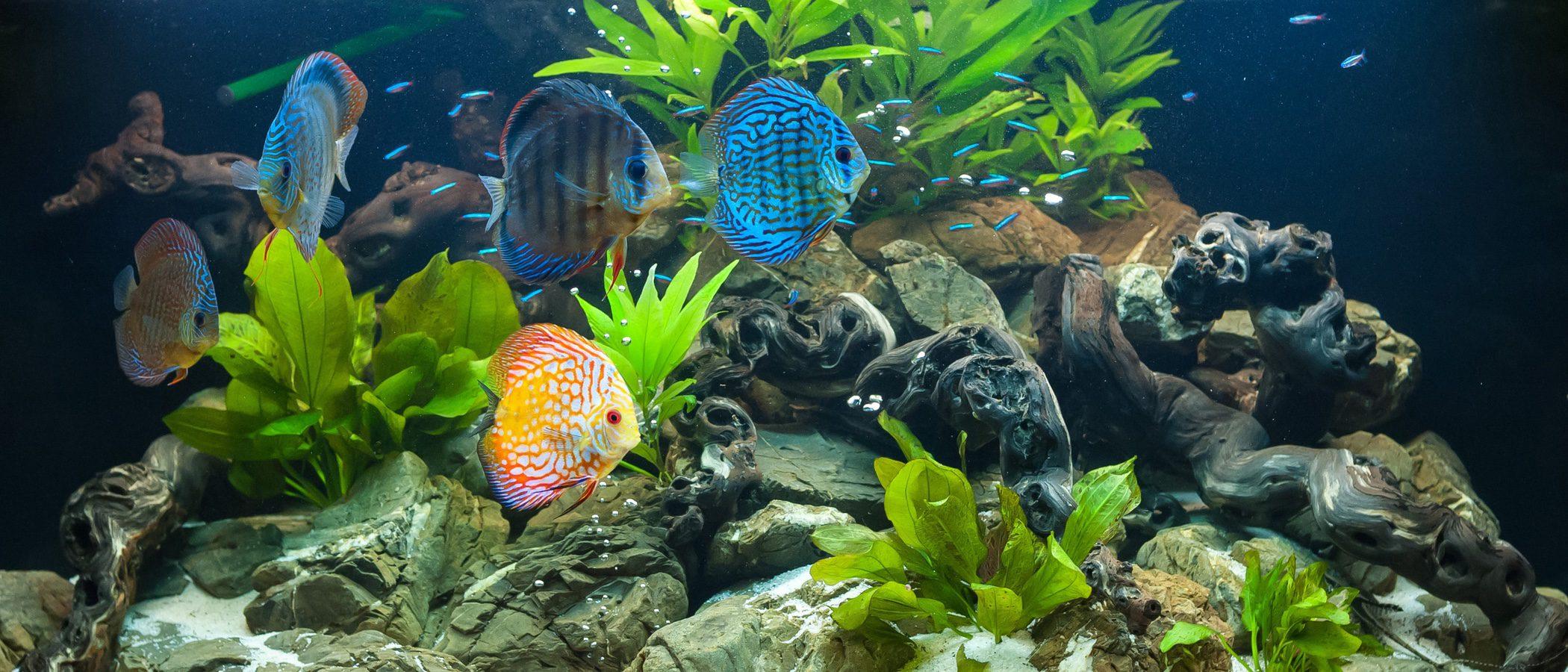 Limpieza del acuario: consejos básicos