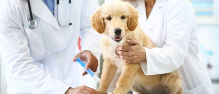 Los vacunas anuales para perros según la normativa