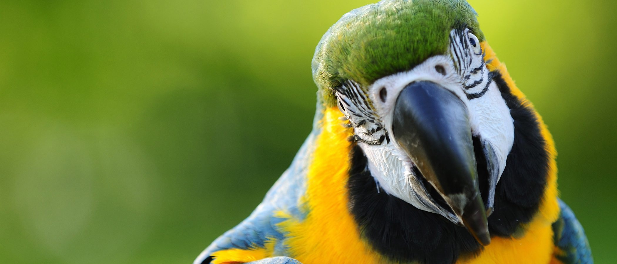 Pájaros que hablan, ¿qué hago si el mío aprende a insultar?