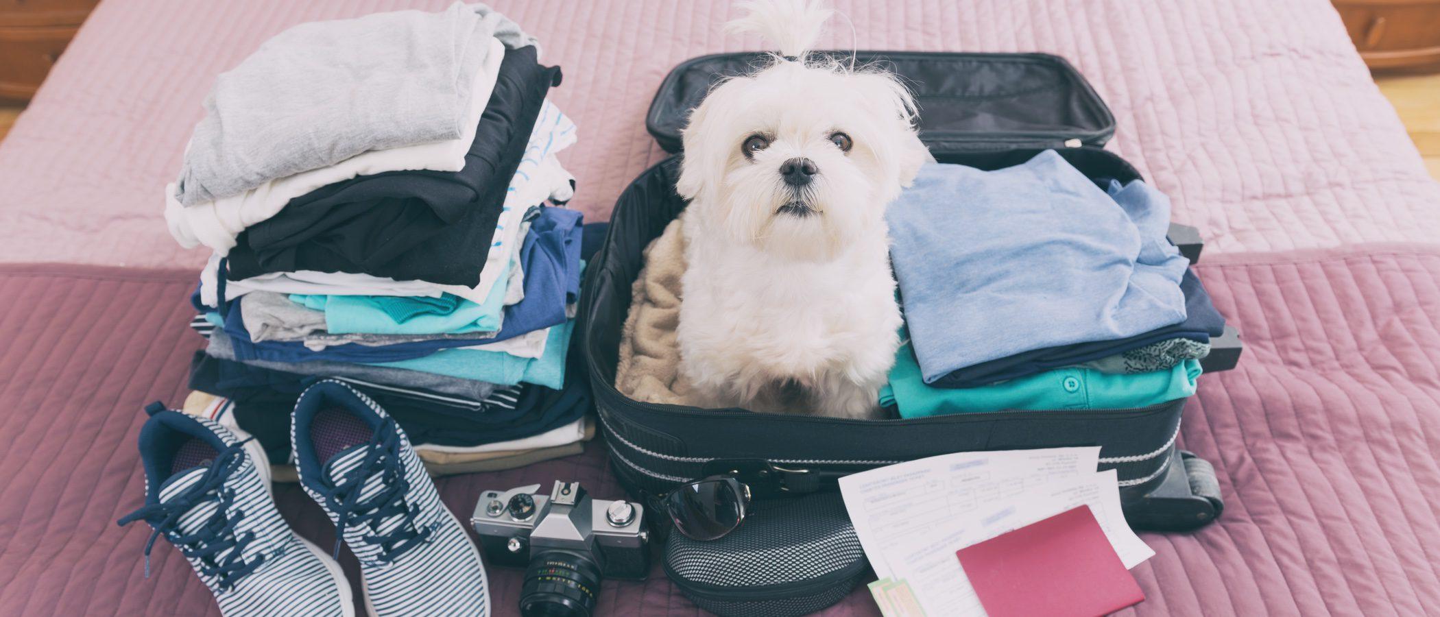 Cómo viajar con tu mascota al extranjero