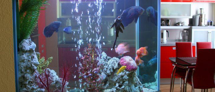 ¿Qué productos necesito si acabo de comprarme un acuario?