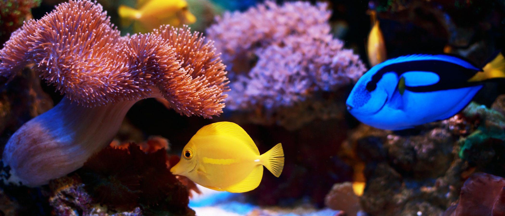 Un repaso por los peces del acuario de 'Buscando a Nemo'
