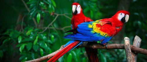 Un repaso por los pájaros exóticos más comunes en los hogares