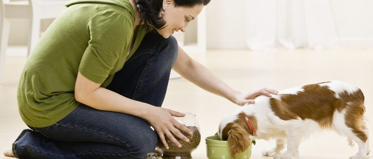 La dieta BARF para perro: ¿es aconsejable?