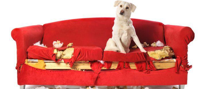 Mi perro tiene problemas de comportamiento compulsivo, ¿qué hago?