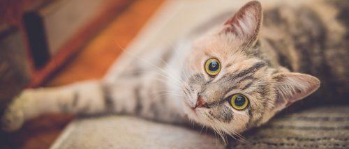 5 fantásticas películas que te harán amar a los gatos
