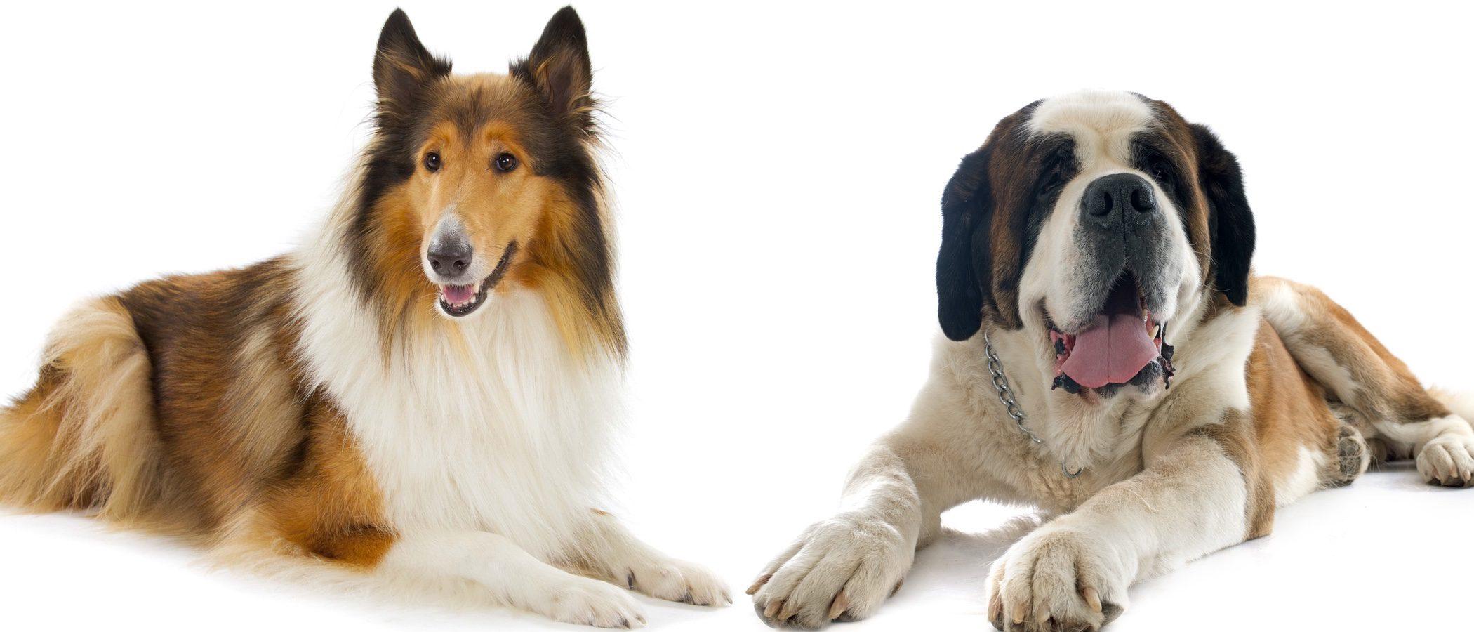 Los perros de cine que más nos han marcado
