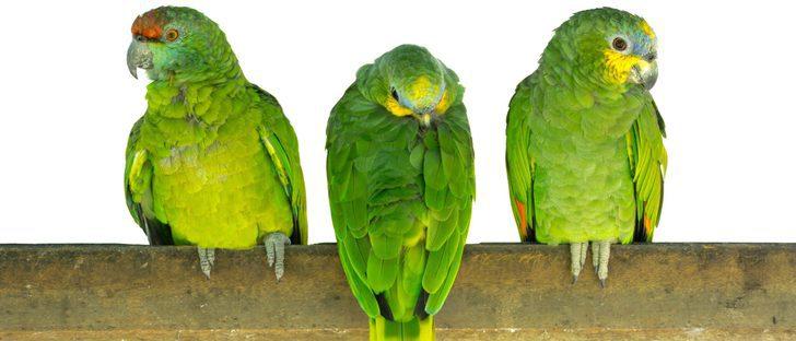 Cotorra: una bella ave exótica