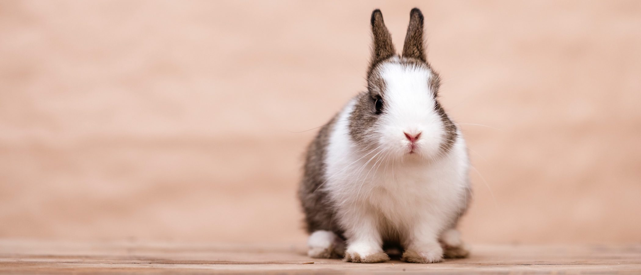 Cómo elegir el nombre de tu conejo