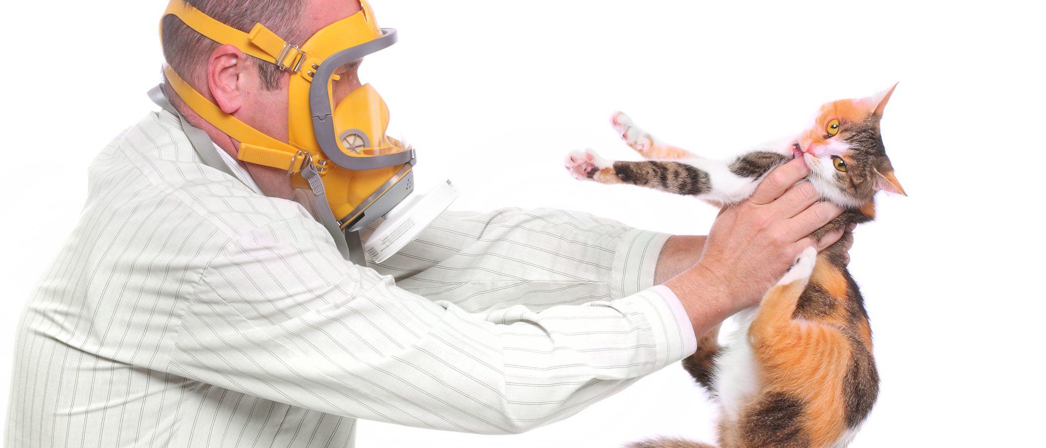 Cómo vivir con alergia al gato