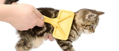 Cómo quitar los nudos en el pelo de un gato
