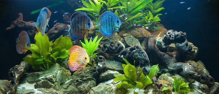 Tipos de filtro para acuario bekia mascotas for Clases de peces de acuario