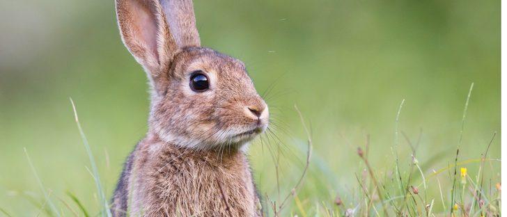 ¿Puede morir de calor mi conejo?