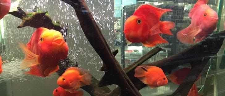 Las 10 enfermedades m s comunes en los peces de acuario for Enfermedades de peces de agua fria