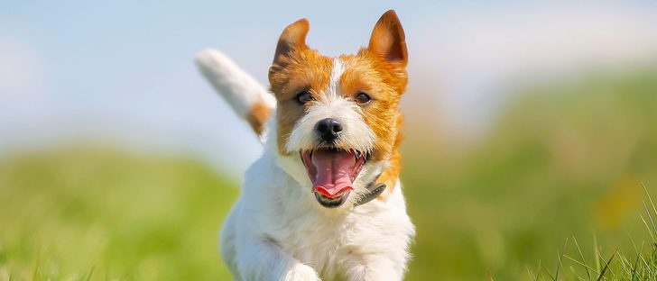 Conoce a tu perro según el movimiento de su cola