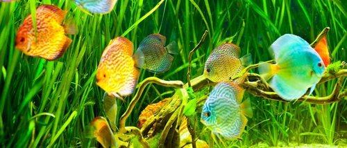 Tipos de alimentos para peces