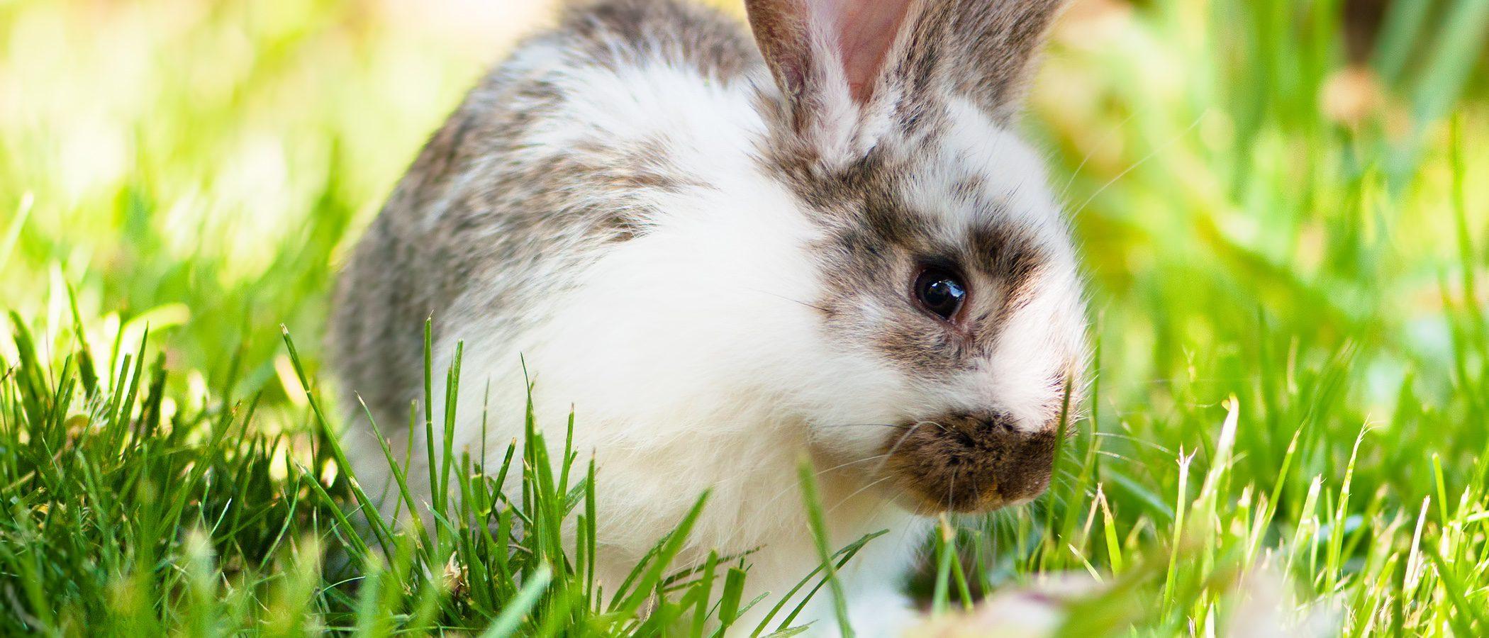 ¿Por qué los conejos no son roedores?