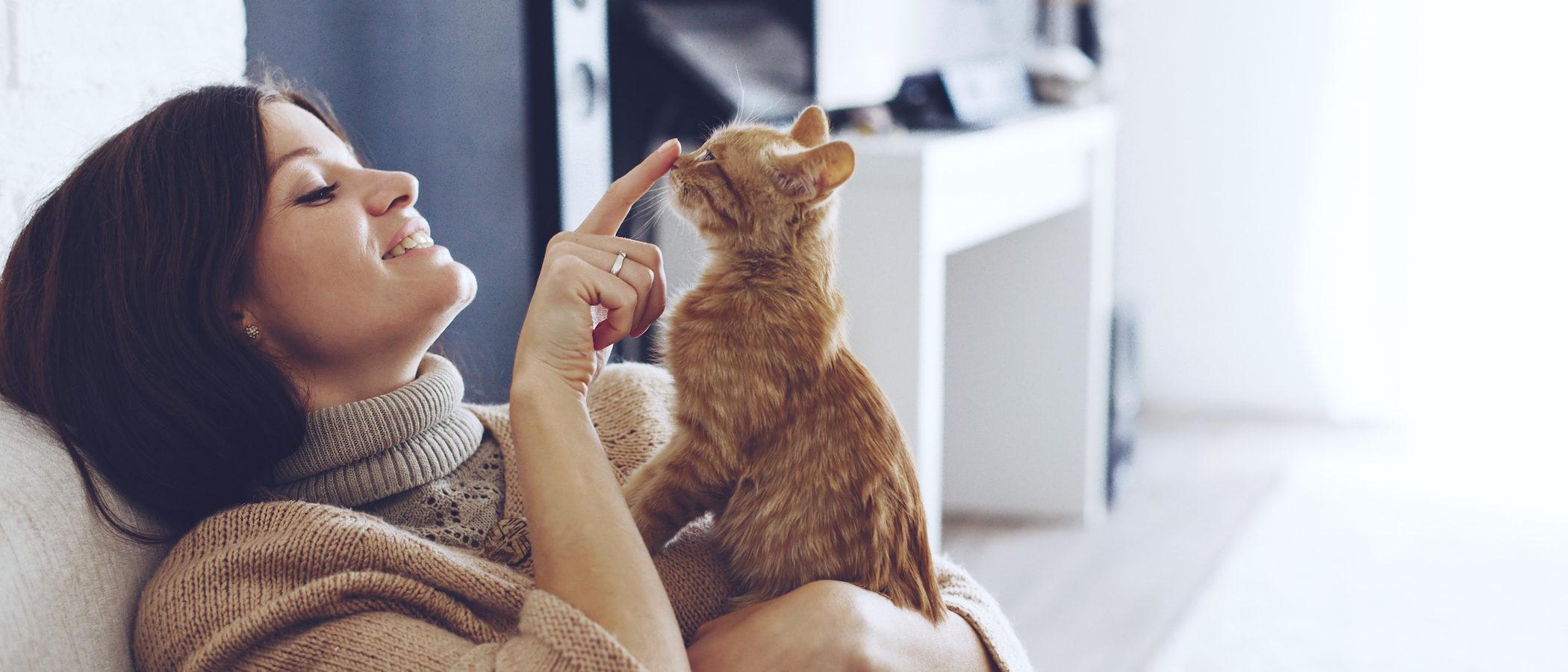 Estas son las razas de gato más cariñosas