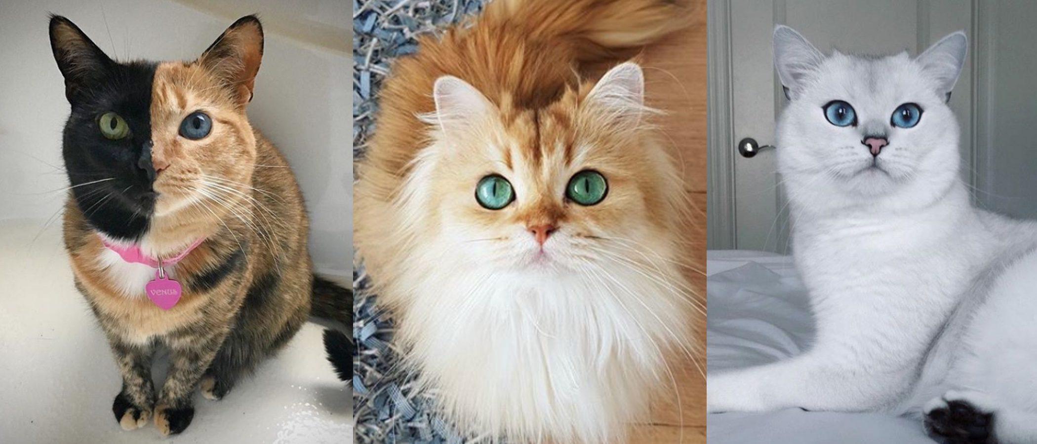 ¡Día Internacional del gato! Descubre los felinos más influencers