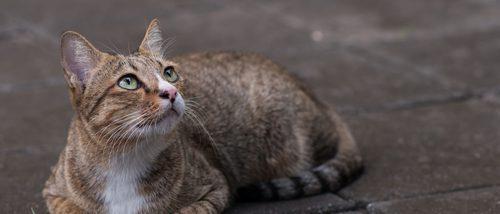 Los gatos vuelven a casa cuando se pierden por otra cosa distinta a la comida