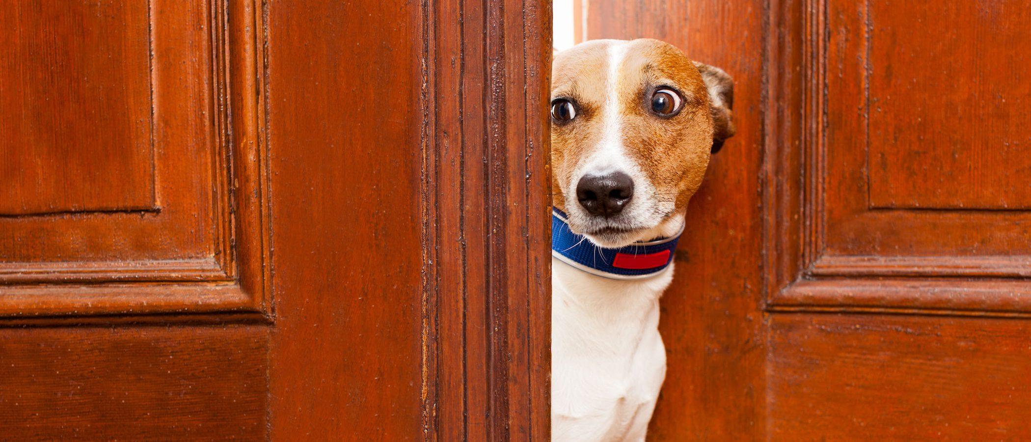 4 cosas a las que tu perro tiene mucho miedo