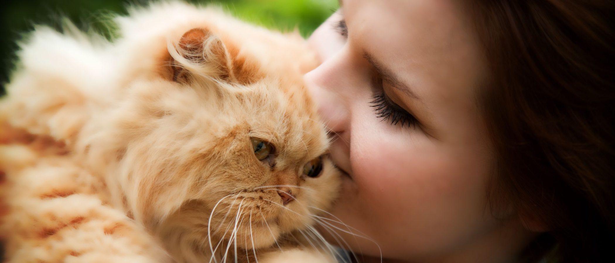 Gato persa: 10 curiosidades que no conocías