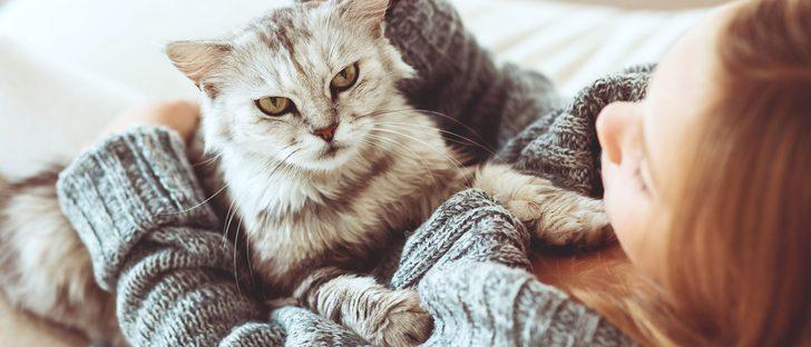 Gato diabético: Cómo tratar la diabetes en este felino