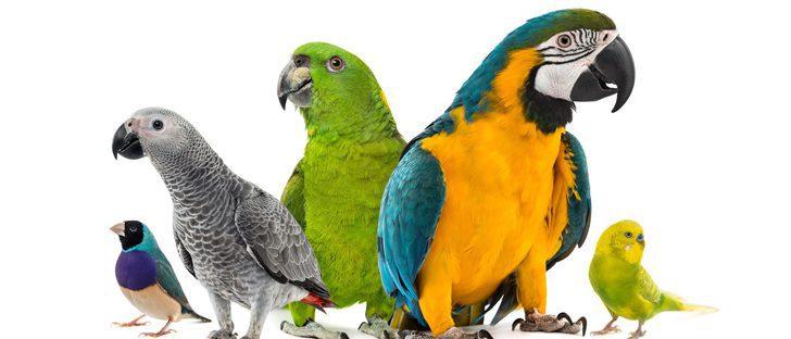 8 curiosidades sobre las aves realmente sorprendentes