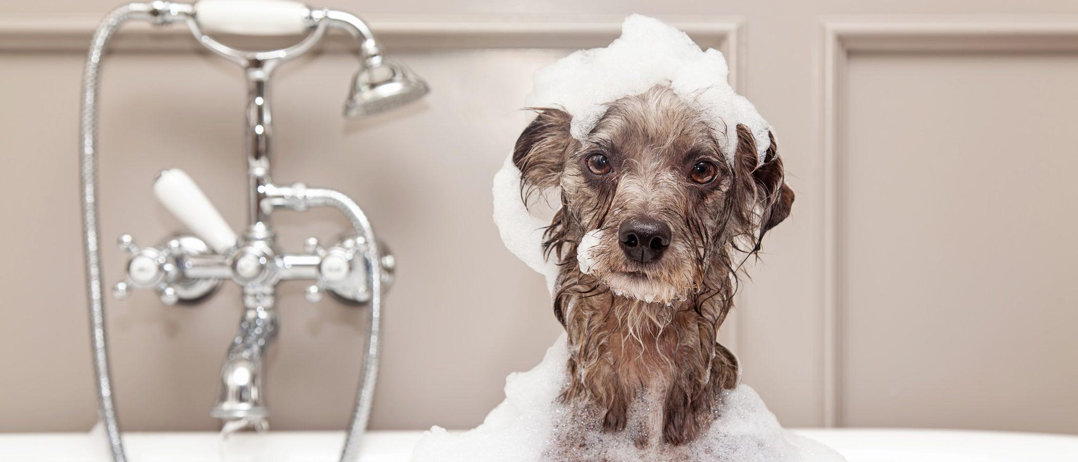 9 mitos sobre el baño de los perros