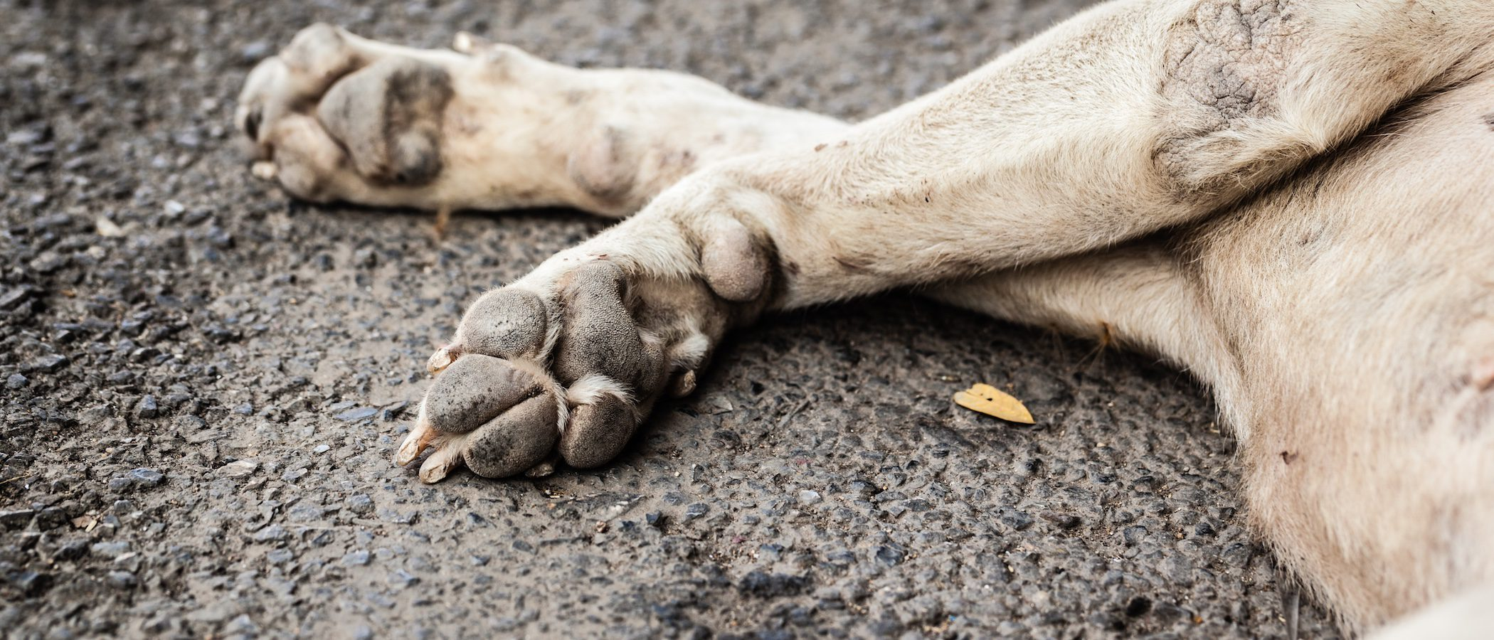 ¿Dónde entierro a mi perro?