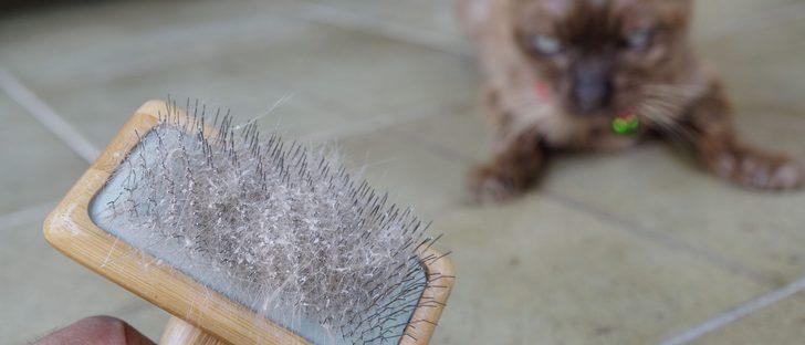 La caspa en los gatos