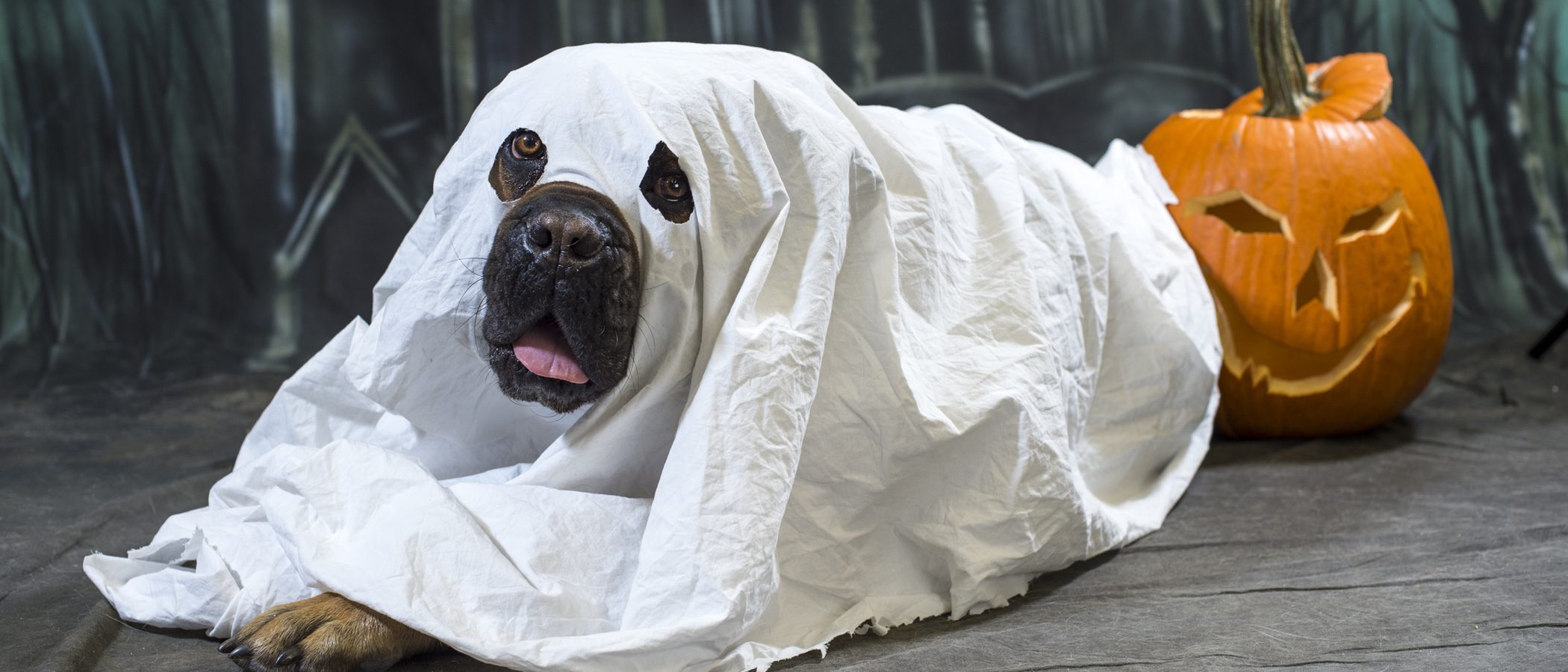 ¡5 disfraces de Halloween muy divertidos para tu mascota!