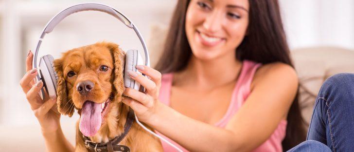 Musicoterapia para mascotas