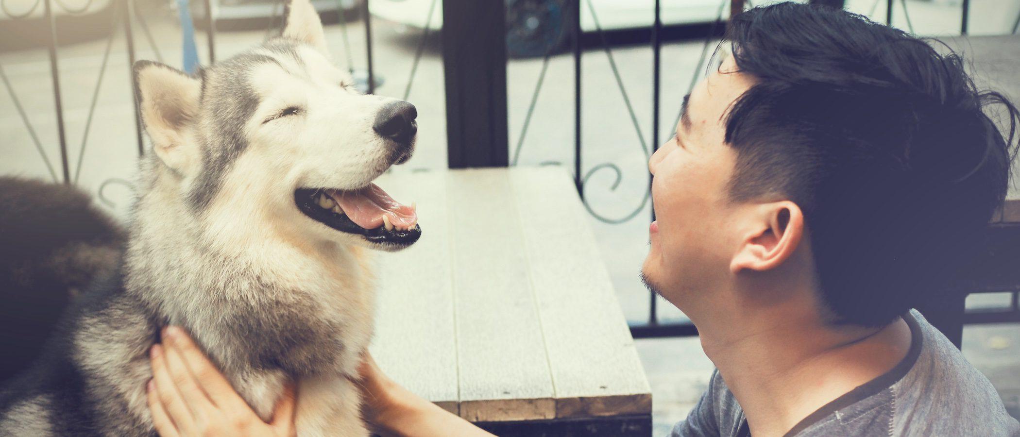 ¿Cómo cuidar a un perro o a un gato ciego?