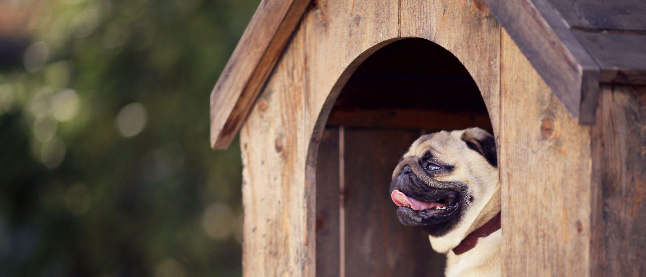 Ideas originales para hacerle una casa a tu perro