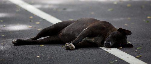 Las 10 razas de perros con menos esperanza de vida