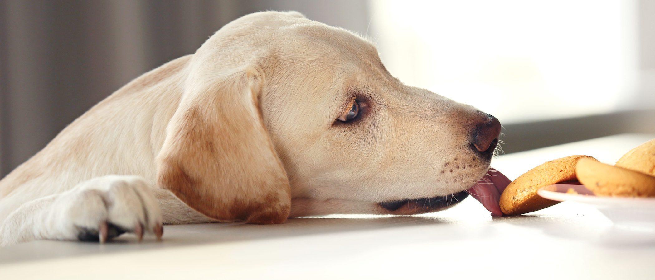 Cómo hacer galletas para perros en el microondas