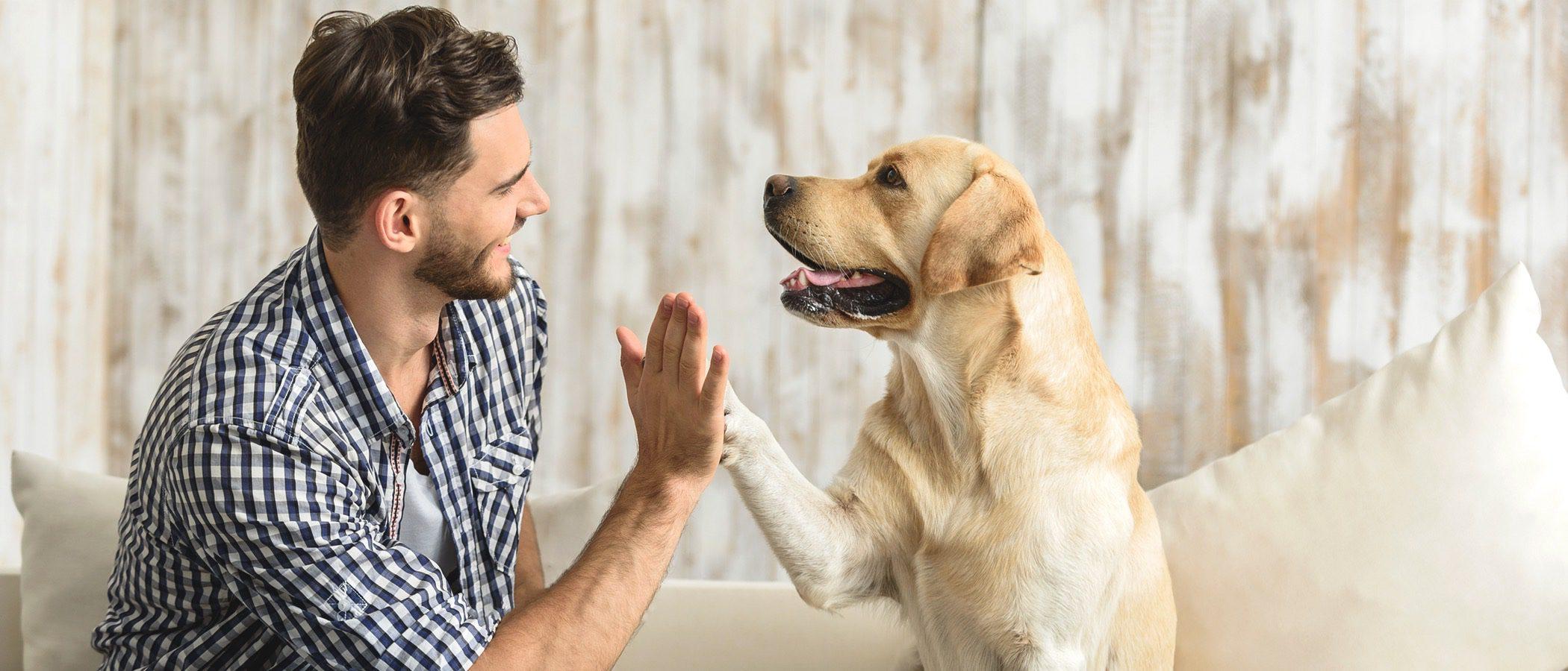 Juegos para hacer en casa con tu perro los días de lluvia