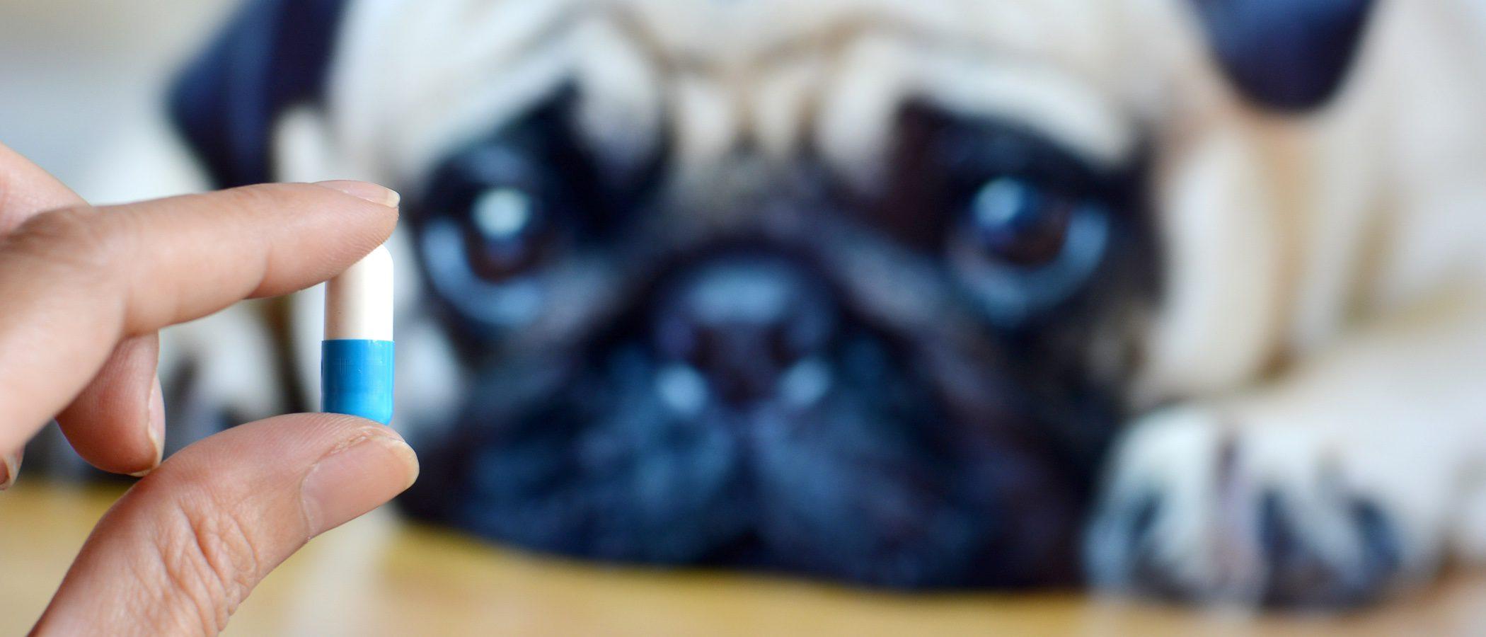 Cómo dar una pastilla a tu perro de la forma más fácil
