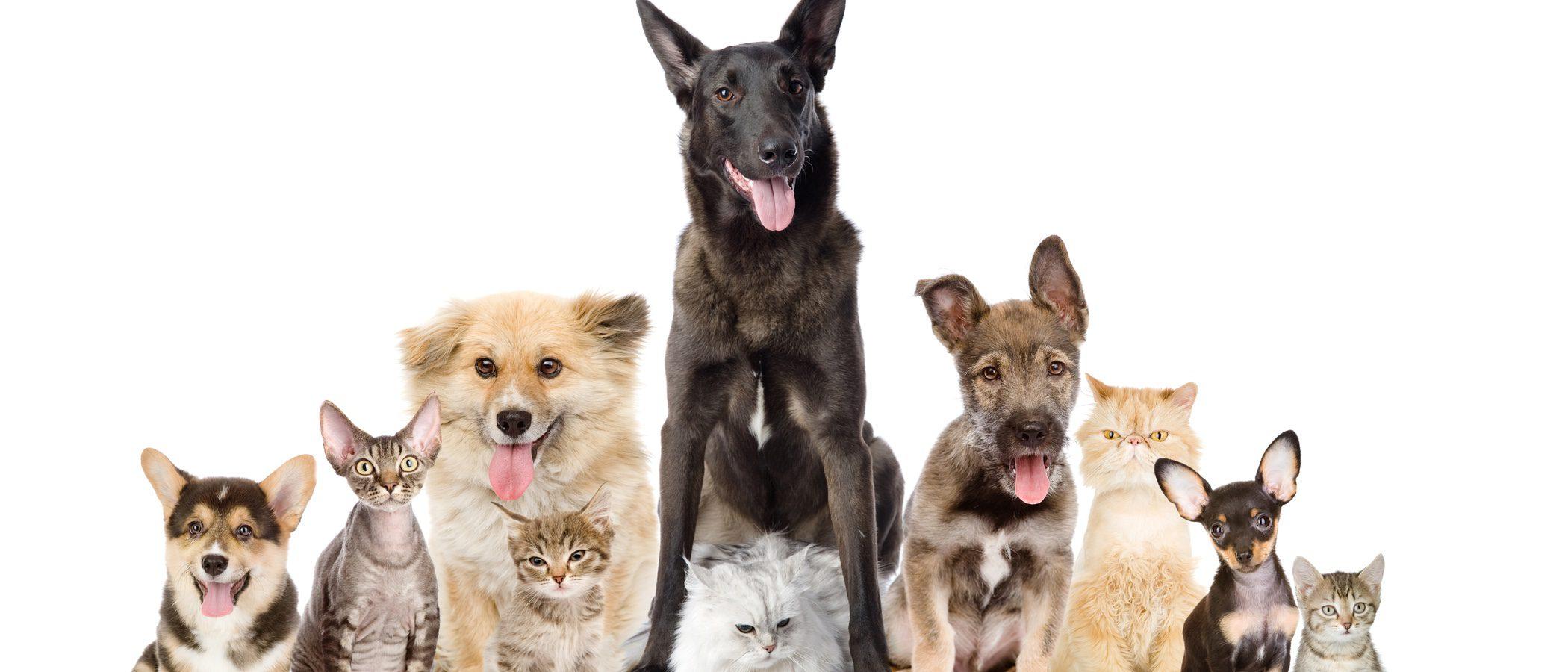 Consejos para tener un perro y un gato viviendo juntos en la misma casa bekia mascotas - Perros para tener en casa ...