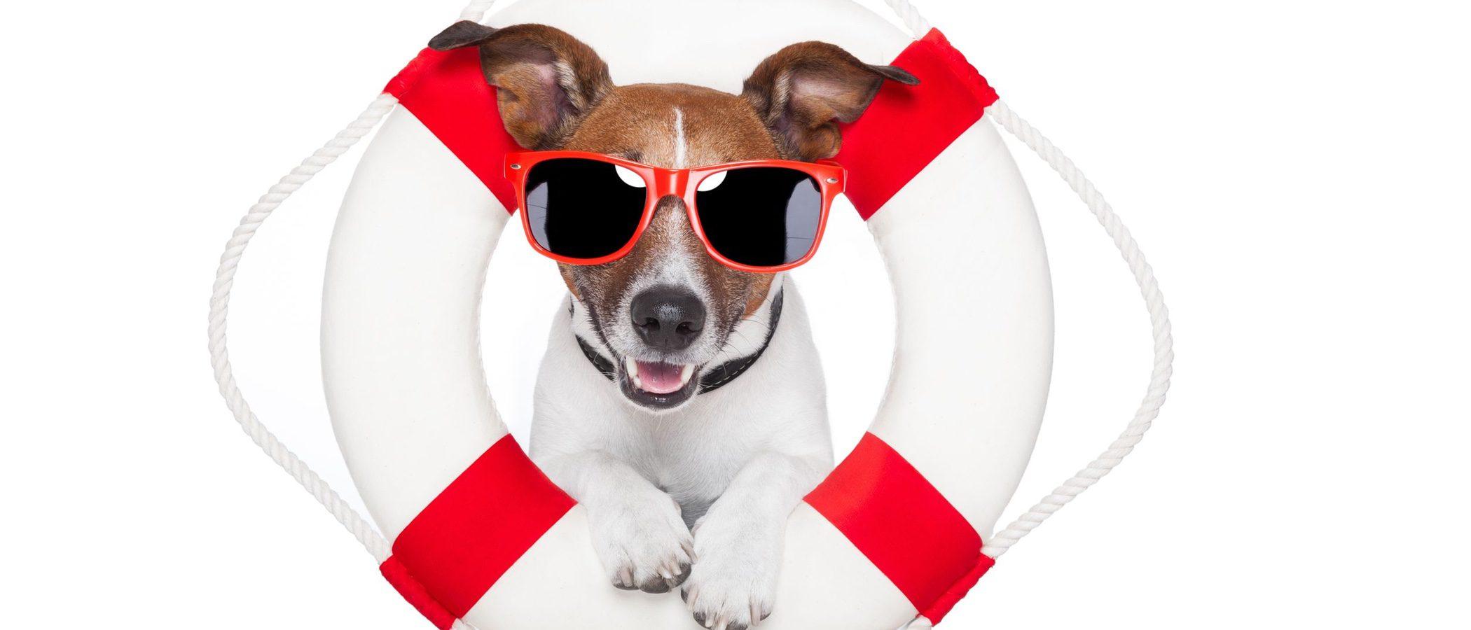¿Sabías cómo se entrenan los perros de asistencia para salvar vidas?