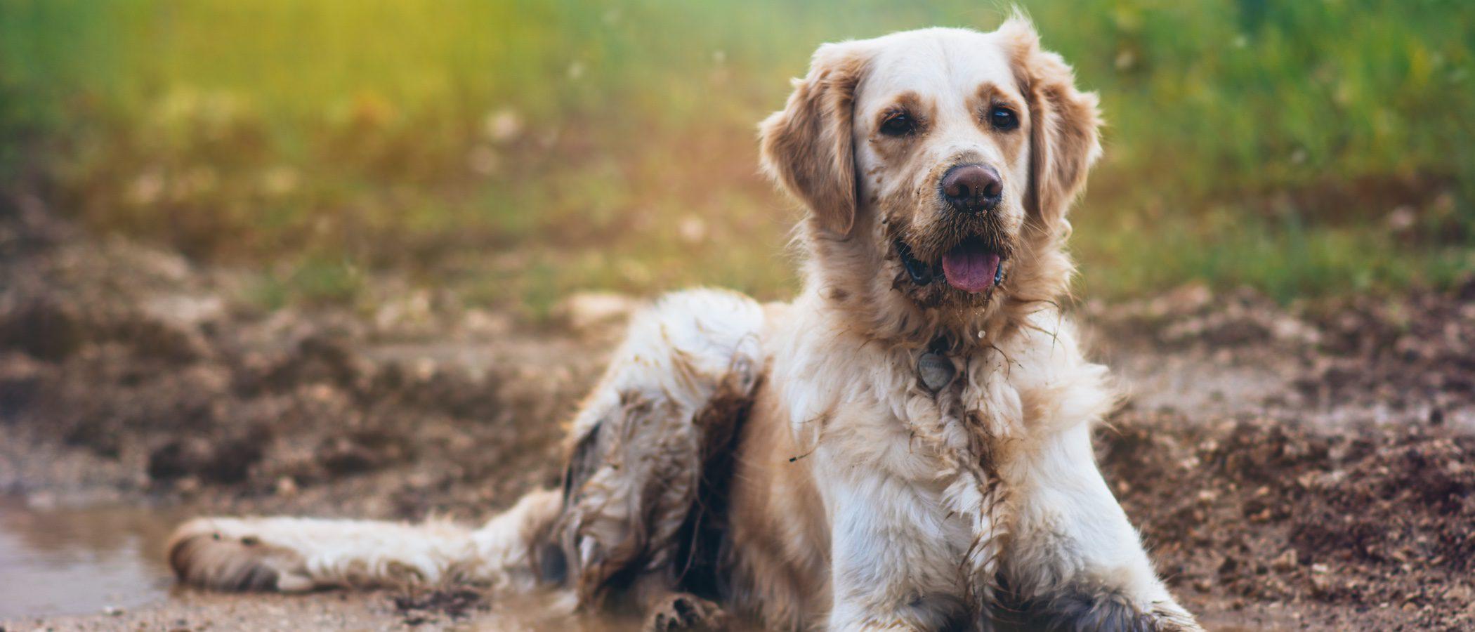 ¿Por qué huele mal mi perro?
