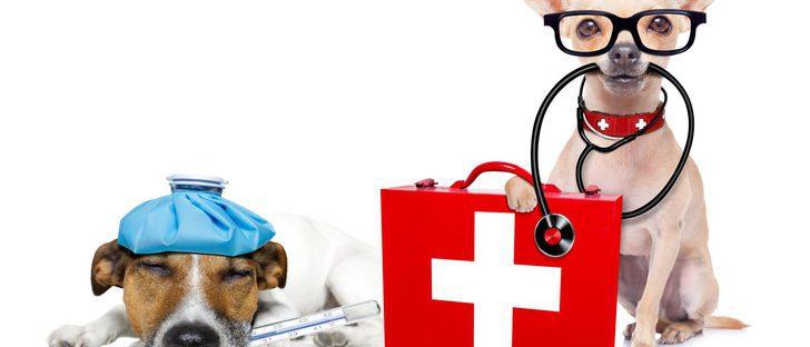 Kit de primeros auxilios para tu mascota