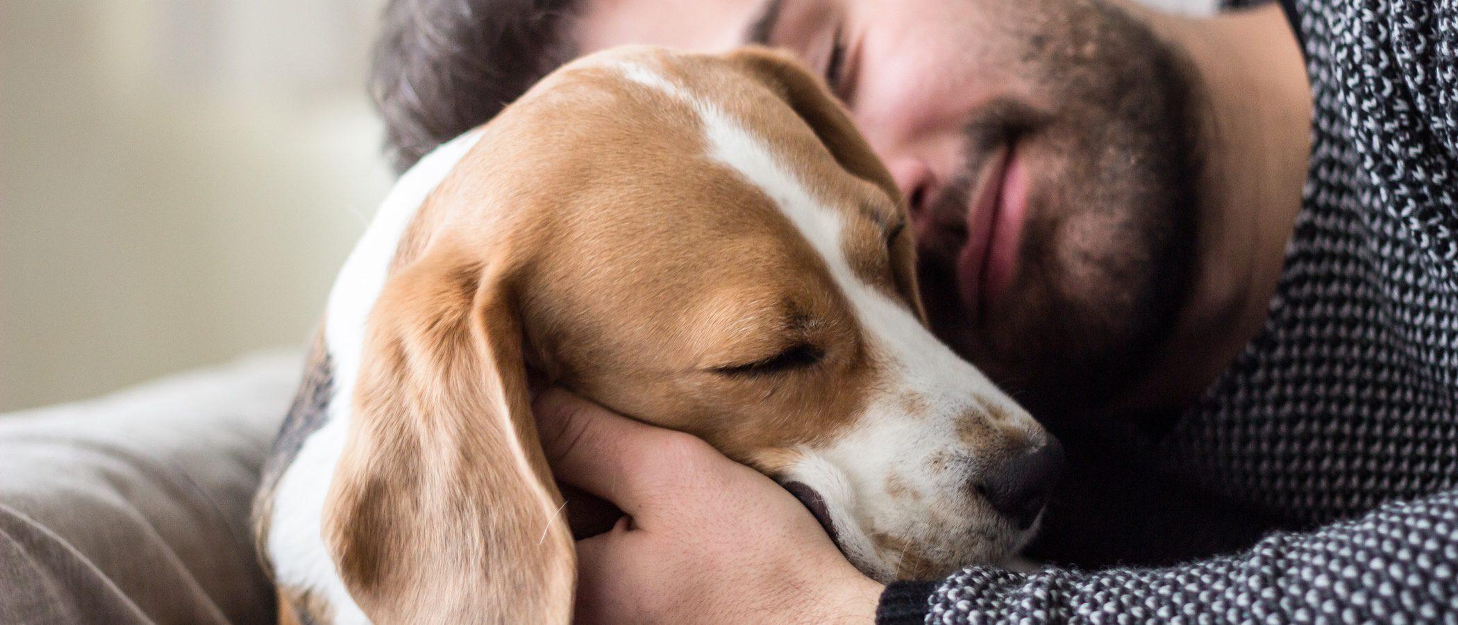 Descubre todo lo que debes saber sobre el embarazo canino