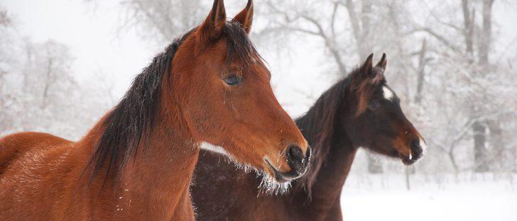 Los caballos también pueden tener bigote