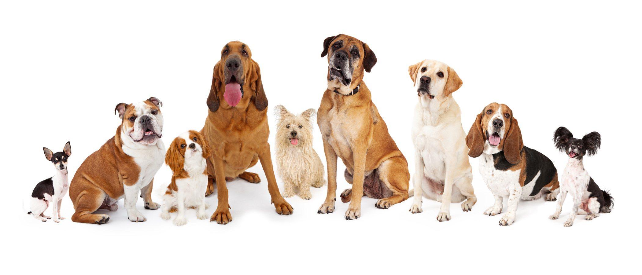 ¿Cuándo dejan de crecer los perros?